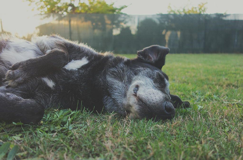 jardins e cães